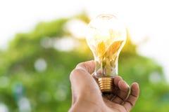 人拿着与太阳的电灯泡自白天,与树bokeh背景使用墙纸或背景想法工作的事务的w 免版税图库摄影