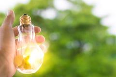 人拿着与太阳的电灯泡自白天,与树bokeh背景使用墙纸或背景想法工作的事务的w 库存图片
