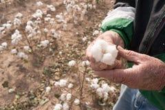 人拿着棉花蒴农田得克萨斯农业经济作物 免版税库存图片