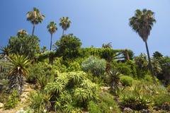 仙人掌、棕榈树和龙舌兰风景 免版税库存照片