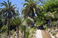 仙人掌、棕榈树和龙舌兰风景 库存照片