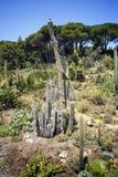 仙人掌、棕榈树和龙舌兰风景 免版税库存图片