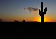 仙人掌剪影五颜六色的日落,亚利桑那,美国, copys 免版税图库摄影