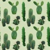 仙人掌厂无缝的样式 异乎寻常的热带夏天植物的背景 库存照片