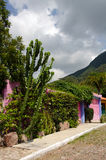 仙人掌和五颜六色的墨西哥房子 库存照片