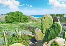 仙人掌和其他植物在撒丁岛 库存图片