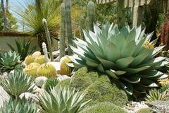 仙人掌和多汁庭院Descanso庭院的 免版税库存图片