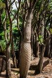 仙人掌和多汁植物在Nong Nooch芭达亚庭院停放,泰国 免版税库存照片