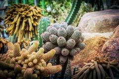仙人掌和多汁植物在Nong Nooch芭达亚庭院停放,泰国 库存照片