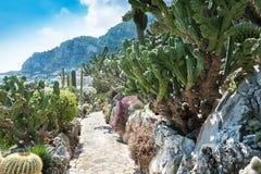 庭院仙人掌和多汁植物在摩纳哥 免版税图库摄影