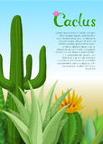 仙人掌和多汁植物海报 库存图片