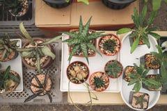 仙人掌和Haworthia 免版税图库摄影
