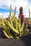 仙人掌圣佩德罗火山,在Jardin de Cactus,兰萨罗特岛 图库摄影
