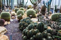 仙人掌在一个植物园里在日内瓦 免版税库存图片