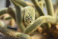 仙人掌在一个热带庭院里 图库摄影