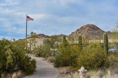 仙人掌在巨人柱国家公园 图库摄影