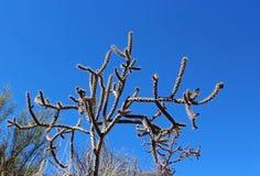 仙人掌在巨人柱国家公园 库存图片