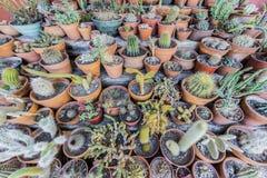 仙人掌在Purmamarca, Jujuy,阿根廷。 库存图片