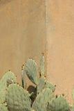 仙人掌对墙壁 免版税图库摄影