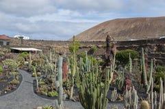 仙人掌庭院兰萨罗特岛 库存照片