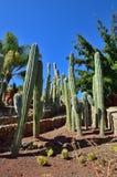 仙人掌庭院,西班牙 库存照片