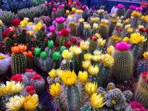 仙人掌植物存贮 免版税库存图片