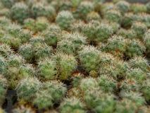 仙人掌植物 免版税库存照片