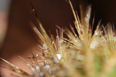 仙人掌植物 库存图片
