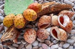 仙人掌的果子 在海小卵石-七大 库存图片