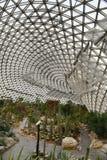 仙人掌的植物园 免版税库存照片