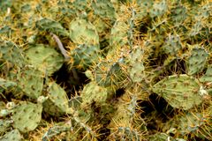 仙人掌的细节在沙漠 免版税库存图片