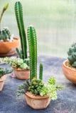 仙人掌科植物安排装饰 免版税库存图片