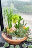 仙人掌科植物安排装饰 免版税库存照片