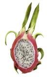 仙人掌科仙人掌龙系列果子pitaya工厂 免版税图库摄影