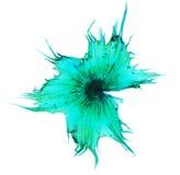 仙人掌花粉在显微镜下, (Stellato-Pilosus W M ) 免版税库存照片