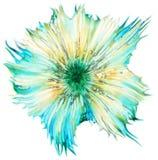 仙人掌花粉在显微镜下, (Stellato-Pilosus W M ) 库存照片