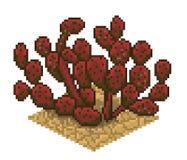 仙人掌被隔绝的gosseliniana传染媒介 库存图片