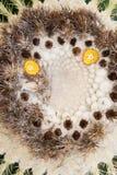仙人掌Mammillaria 免版税库存照片