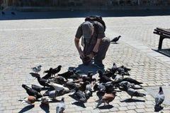 人摄制鸽子 库存照片
