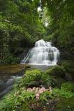 令人敬畏的瀑布在泰国的森林里 库存照片