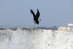 令人敬畏的鸟 免版税库存照片