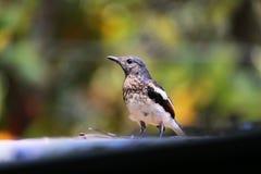 令人敬畏的鸟 免版税库存图片