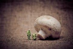 人检查蘑菇的防护套服的 概念食物基因上修改了 被定调子的图象 免版税图库摄影