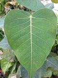 人植物绿色事假  免版税库存图片