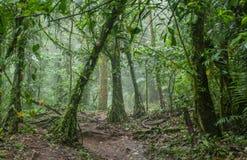 令人毛骨悚然的密林在哥斯达黎加 免版税库存图片
