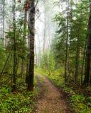 令人毛骨悚然的森林 库存照片