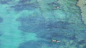 人游泳在海 股票录像