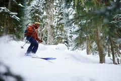 人滑雪者在粉末雪乘坐freeride在森林里 库存图片