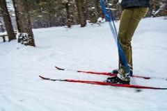 人滑雪 库存图片