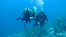 人潜水的加勒比海水下的1080P录影 股票录像